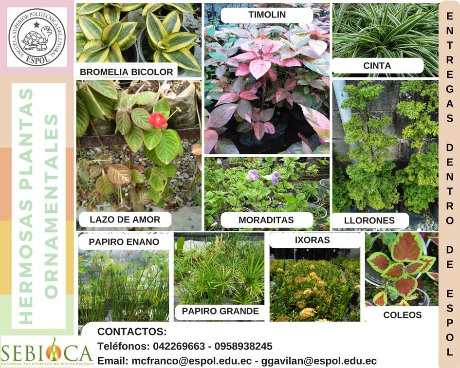 Plantas ornamentales sebioca - Plantas de jardin fotos ...