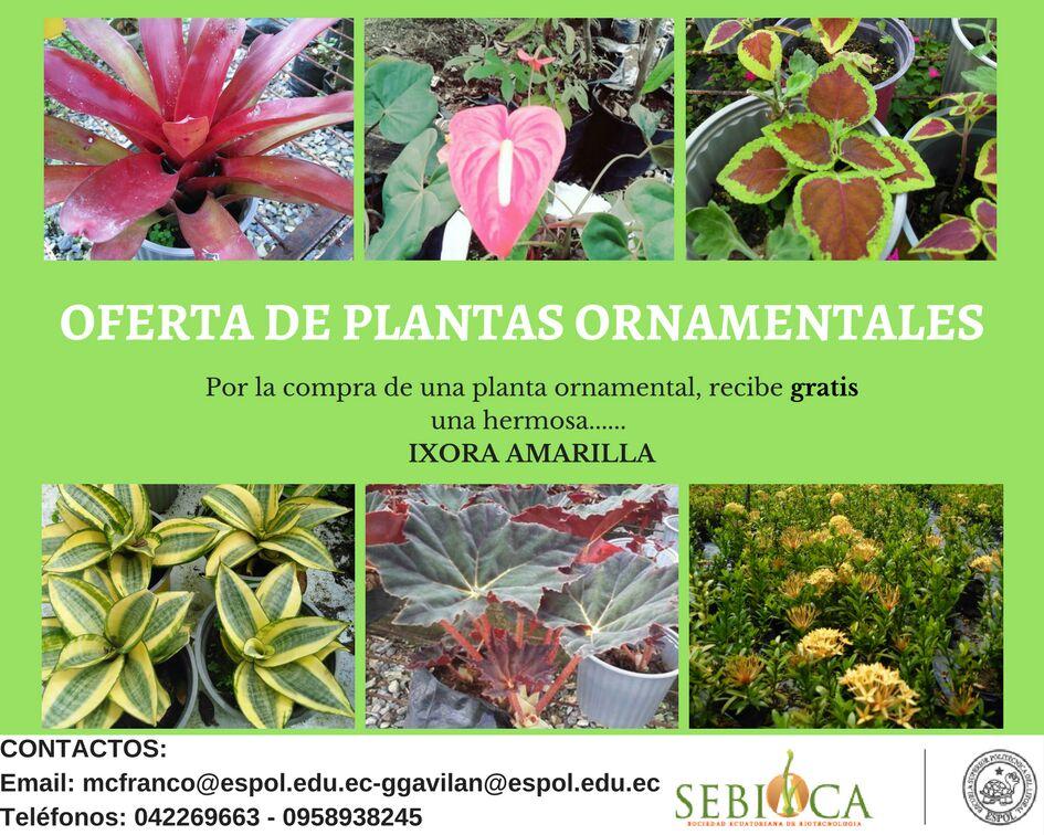 Oferta de plantas ornamentales sebioca for Funcion de las plantas ornamentales